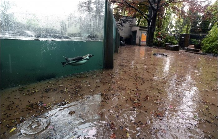 Наводнение в пражском зоопарке (8 фото)