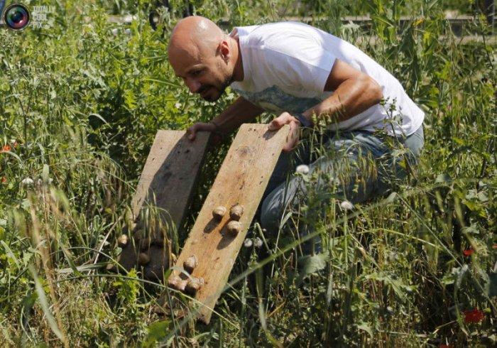 Улиточная ферма в Австрии (14 фото)