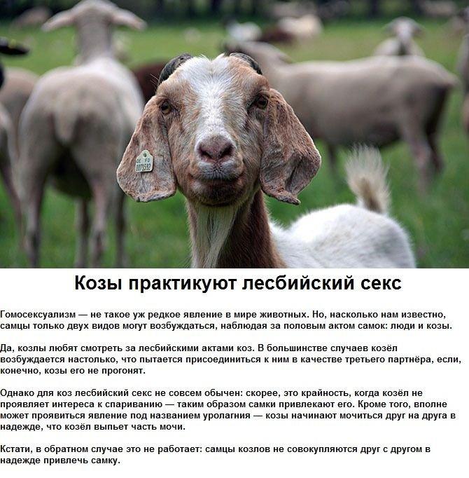Сексуальные странности животных (6 фото)