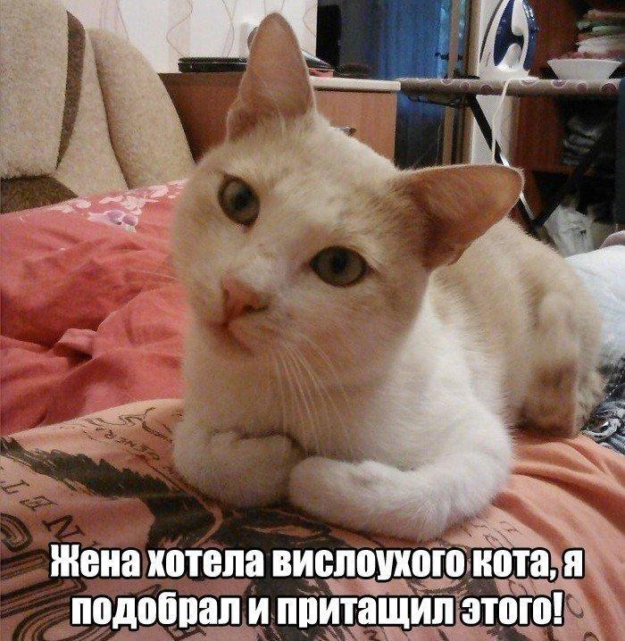 Переделываем кота (3 фото)