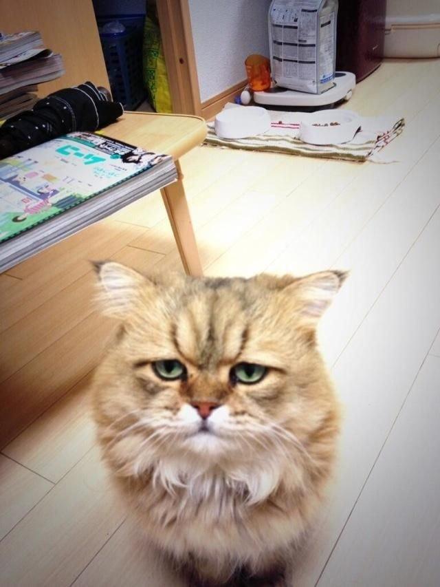 Самый печальный кот в мире (10 фото)