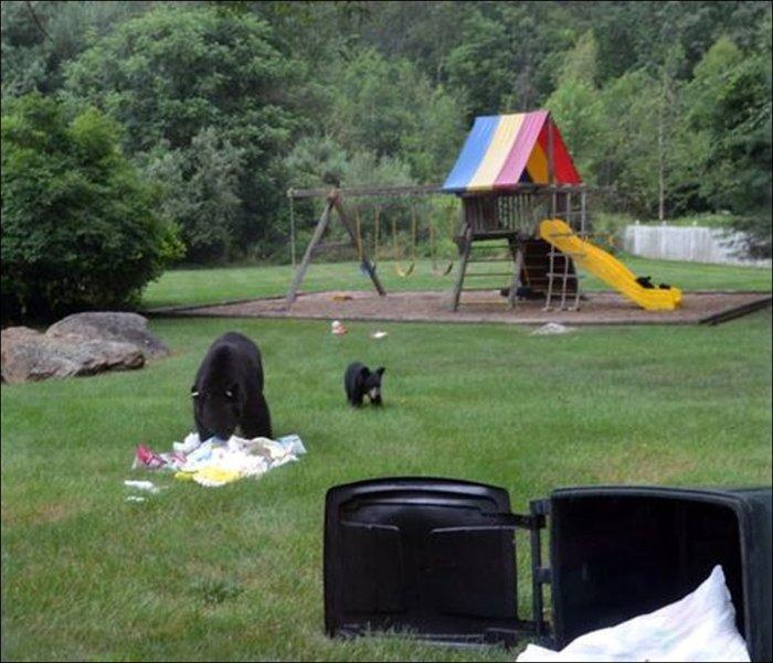 Праздник у медвежат (5 фото)