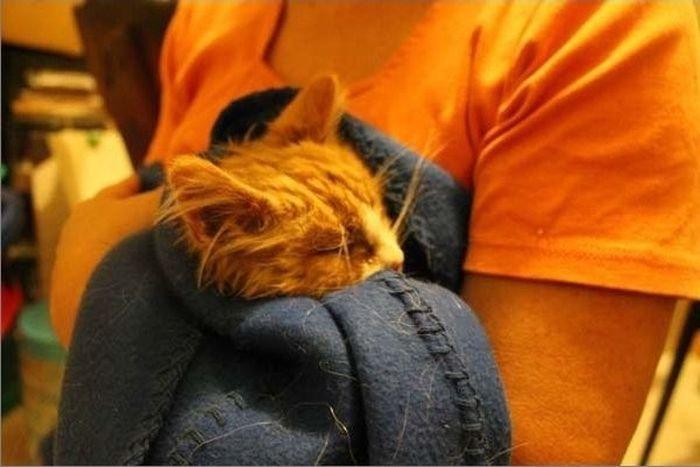 Спасение котят (15 фото)