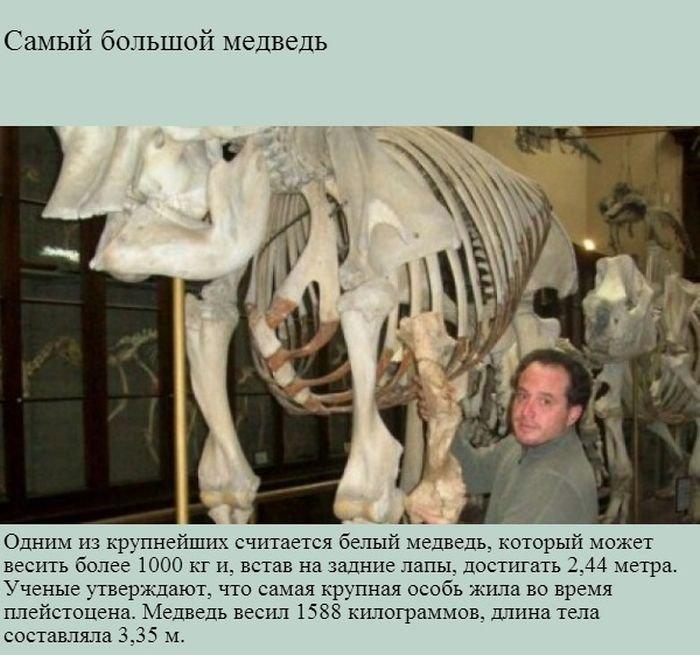 Факты о медведях (9 фото)