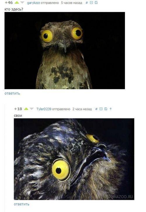 Скриншоты из социальных сетей. Часть 33 (35 фото)