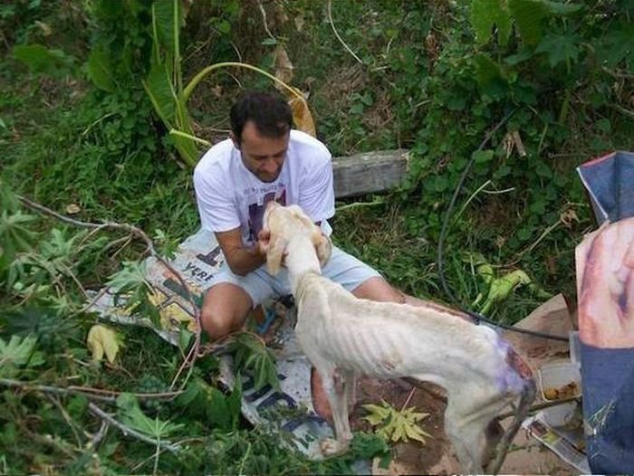 Спасение умирающего пса (23 фото)