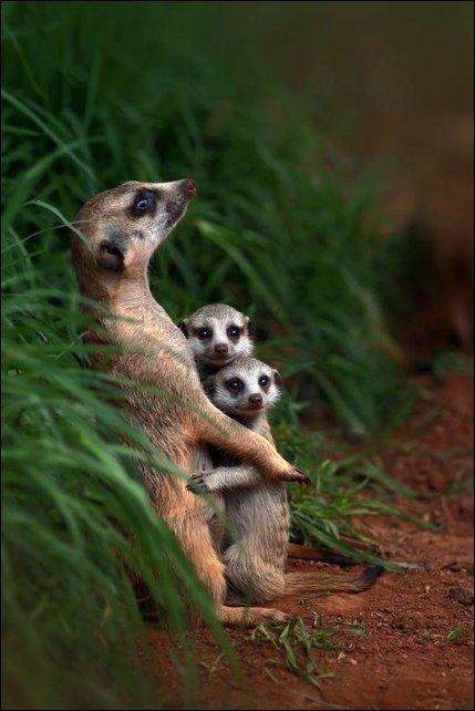 Семейные фотографии в животном мире (22 фото)