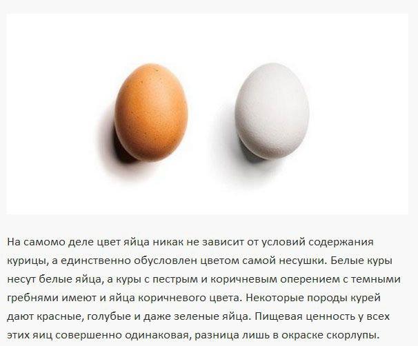 Чем отличается коричневое яйцо от белого (4 фото)