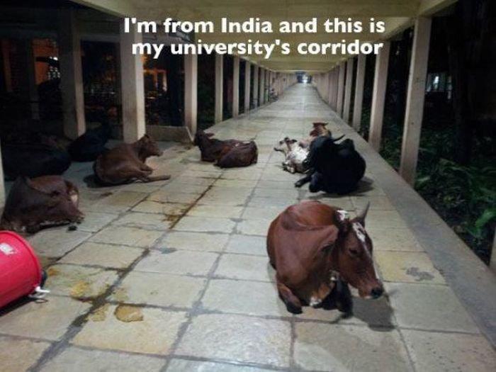 Только в Индии (24 фото)
