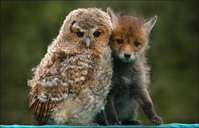 Дружба в животном мире (13 фото)