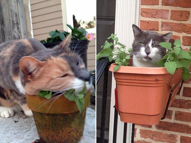 Коты-наркоманы (17 фото)
