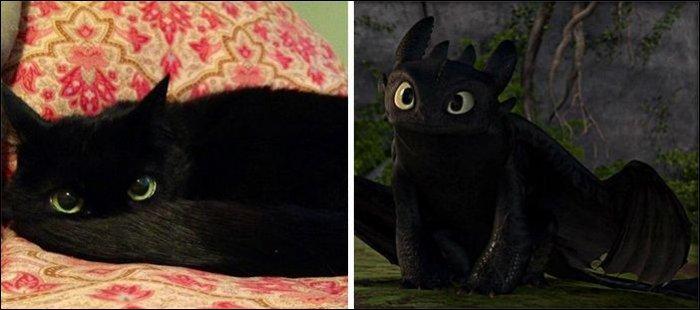 На кого похожи кошки (25 фото)