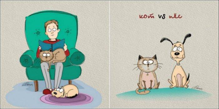 Отличия котов и собак (6 фото)