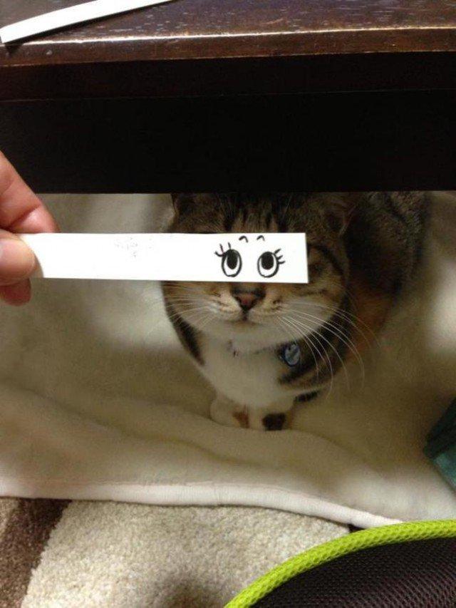 Коты с нарисованными глазами (15 фото)