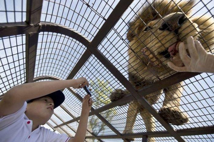 Зоопарк наоборот (14 фото)