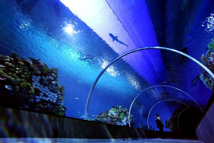 Океанариум в Дании (18 фото)