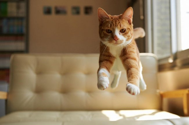 Стоп-кадр с котами (15 фото)