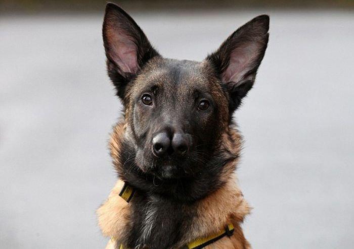 Собака с двойным носом (8 фото)