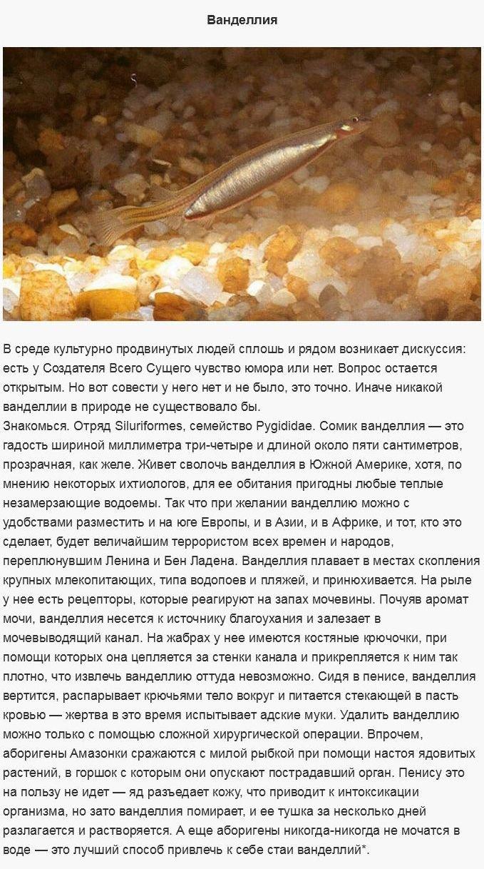 Опасные существа (19 фото)