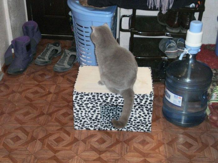 Дом для кота своими руками (28 фото)