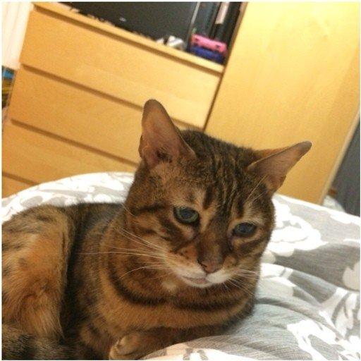 Грустный кот (4 фото)