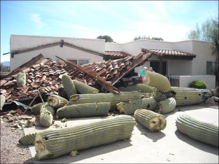 Кактус возле дома (2 фото)