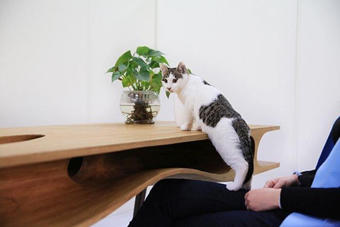 Стол для кота (6 фото)