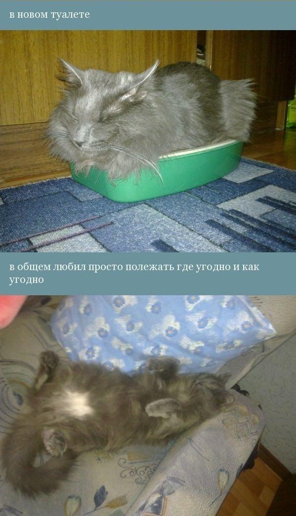 История одного котенка (12 фото)