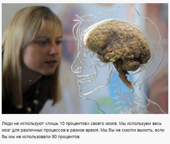 Популярные научные заблуждения (30 фото)