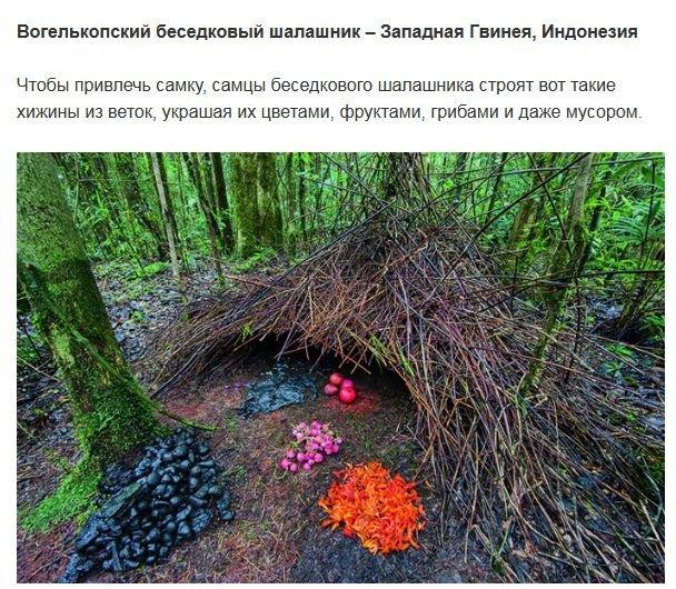 Необычные сооружения животных (10 фото)