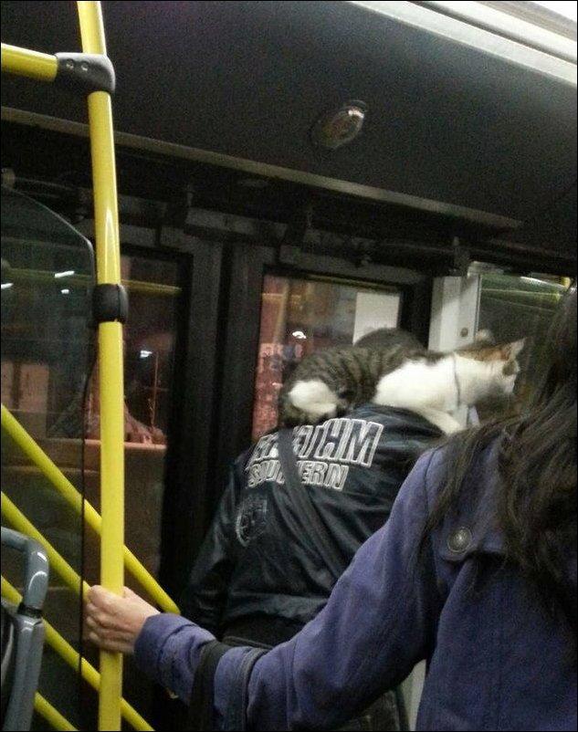 Общественный транспорт в Сербии (44 фото)