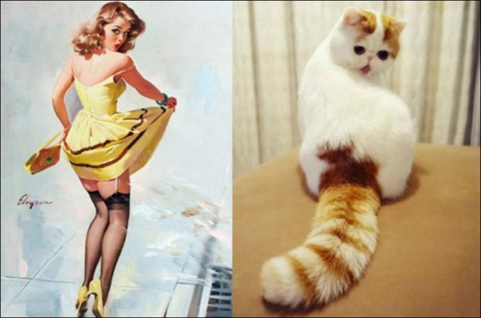 Коты и девушки в стиле пин-ап (42 фото)