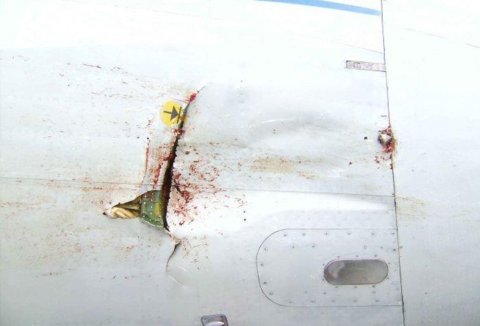 Самолет против гуся (22 фото)