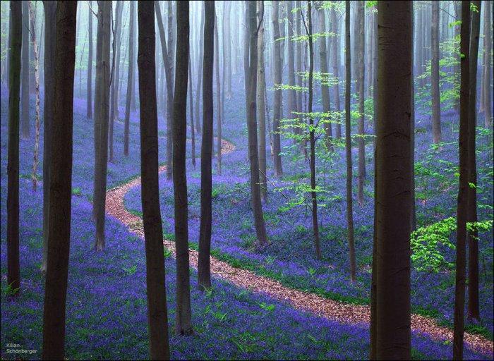 Лес колокольчиков (14 фото)
