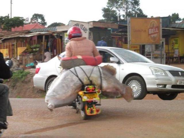 Странности на дороги (71 фото)