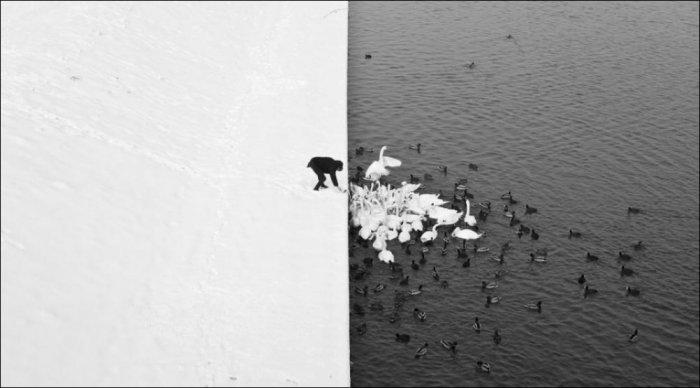 Контрастные снимки природы (21 фото)