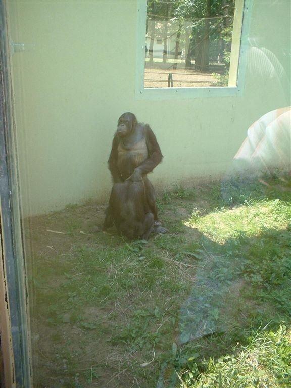 Животные-извращенцы (8 фото)