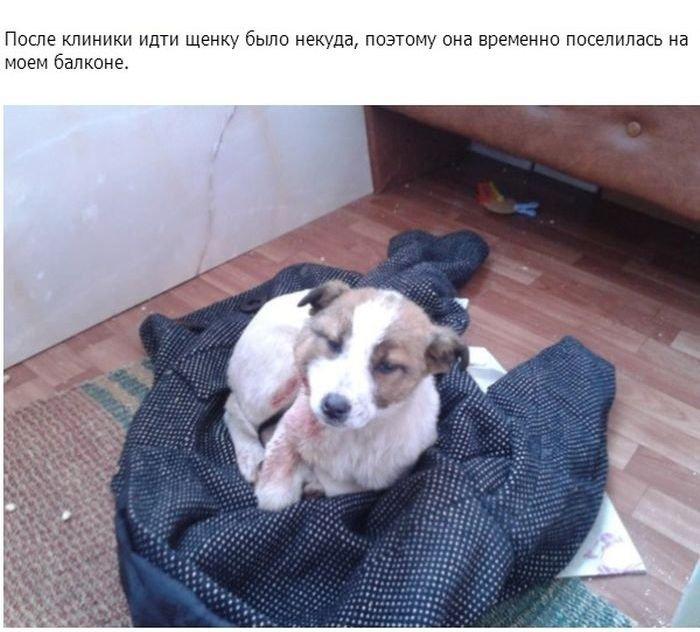 Спасение умирающего щенка (11 фото)