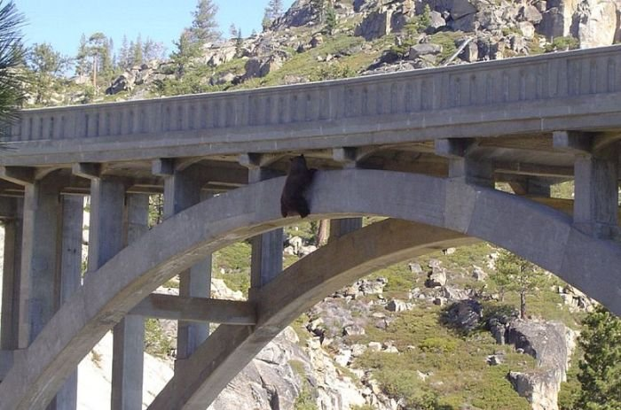 Спасение медведя (6 фото)