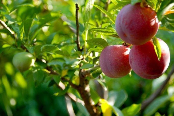 Дерево-сад (8 фото)