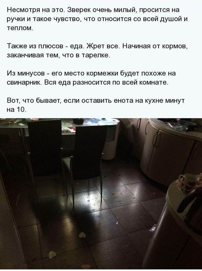 Домашний енот (14 фото)