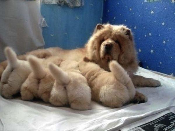 Собачьи попки - новое помешательство японцев (18 фото)