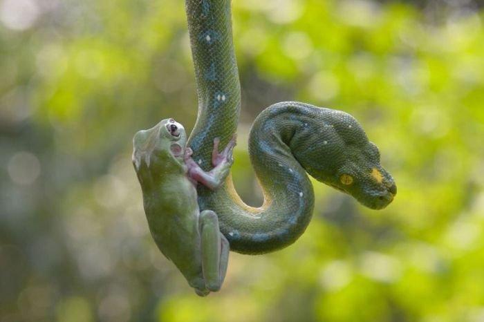 Змея и лягушка (7 фото)