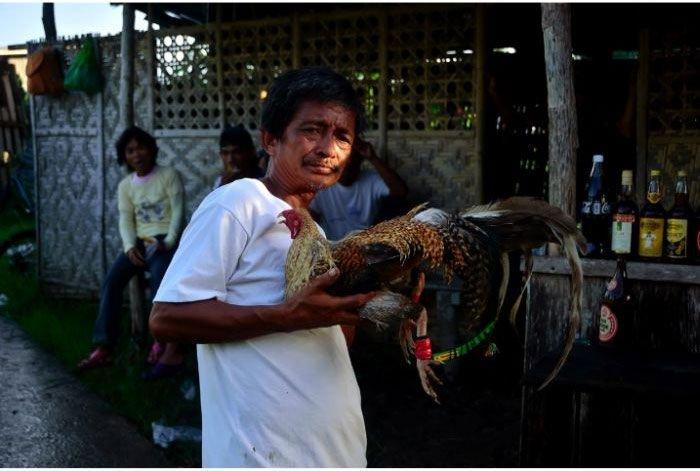 Краткая информация о Филиппинах (38 фото)