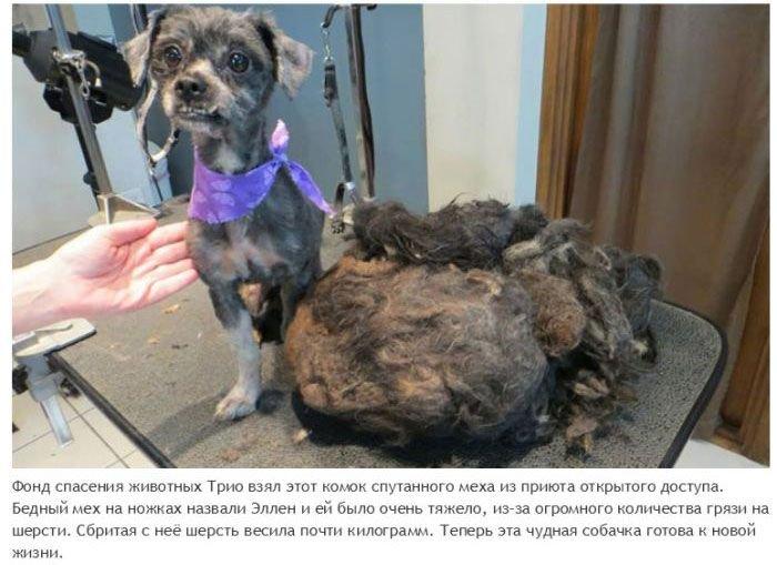 Спасение бездомных животных (22 фото)
