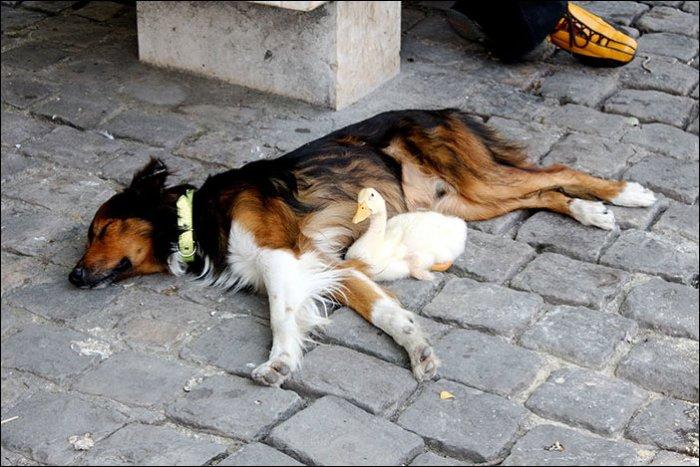 Необычная дружба (3 фото)