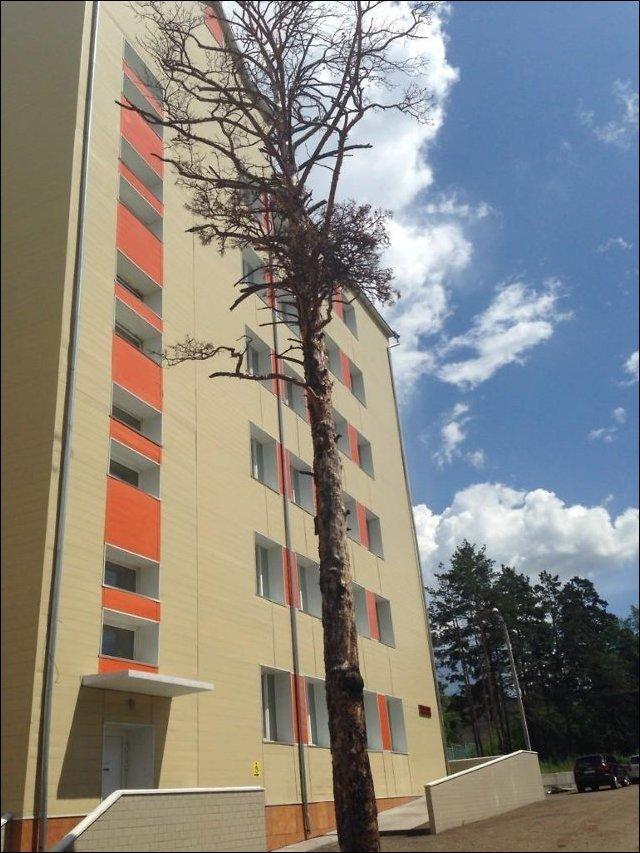 Скульптура из сухого дерева (6 фото)