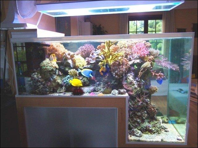 Удивительные аквариумы (30 фото)