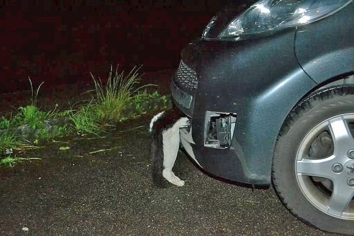 Девушка сбила кота на скорости 120 км/час (3 фото)