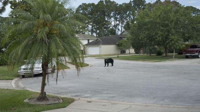 Медведи тоже отдыхают (5 фото)